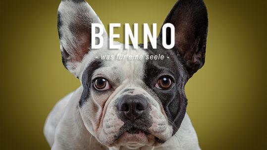 FAB_Blog_Hund_Titelbild_Benno