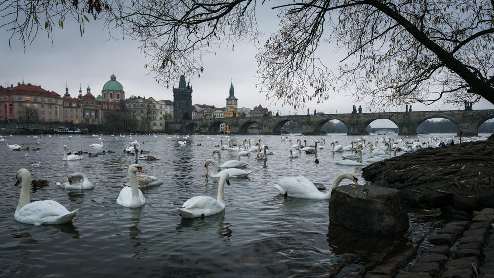 FAB_Blog_Prag_-06463